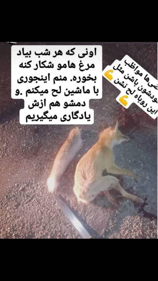 عامل انتشار تصویر کشتن یک قلاده روباه در فضای مجازی دستگیر شد