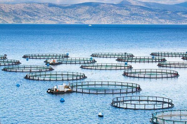 ایران ظرفیت تولید ۱ میلیون تن ماهی در دریا را دارد/رشد ۴۰ برابری تولید آبزیان