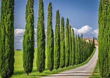 کاشت ۵۰۰ هزار درخت و درختچه تا پایان سال ۹۹