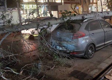 پاسخگویی به ۲۳۰ تماس شهروندان برای رفع خطر درختان شکسته