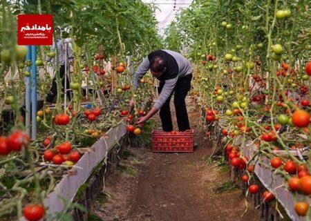 امهال و بخشودگی تسهیلات بانکی بخش کشاورزی در شهرستان کوار